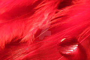 Bead on a red feather 2 by SzkarlatnyCien