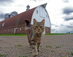barn cat by foodshelf