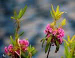 Fragile pink by imonline