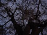 haunted willow tree by monts-et-forets