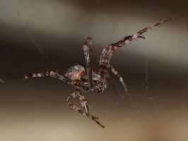 small spider II by pagan-live-style