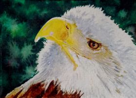 Eagle - miniature watercolor by Giselle-M
