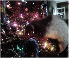 ---Christmas Rat by Thunderclap12