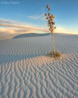 White Sands by gregner