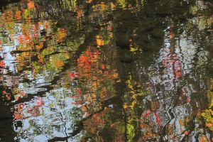 Reflected trees by guro76