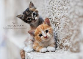 Two Cats by MohammedJ1