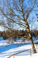 Sunny Winter Day by Ulkerei