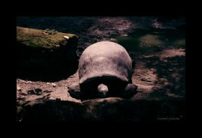 Giant Turtle by Saher4ever