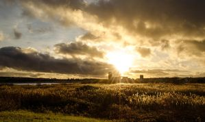 Cardiff Bay Wetlands Reserve by Horroromance