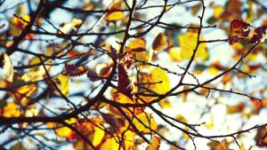 autumn wallpaper by illusionality