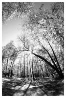 In the Woods II bw by madko