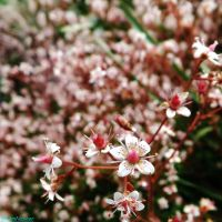 pink spring flowers by IamNasher