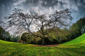 HDR Tree by CharlesWb