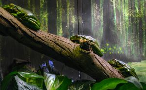 Lazy frogs by shusmitaferdi