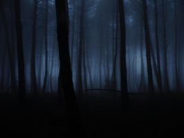 pine forest  fog by AVENGED7X