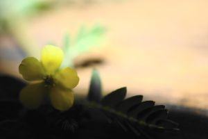 The Sun and the Yellow Flower by SharPhotography