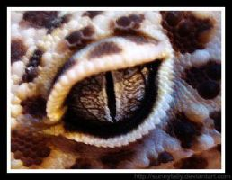 Leopard geckos eye. by sunnytally