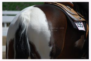 Tobiano by hoodsey