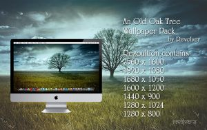 An Old Oak Tree Wallpaper Pack by revolver0067