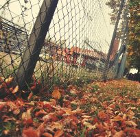 Fallen Leaves by almostkilledme
