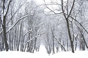 stock: winter forest 4(credit and show the result) by amka-stock