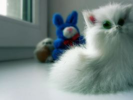 Cute Fluffy White Kitten by CezarisLT