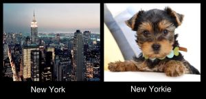 New York New Yorkie by johnstiles