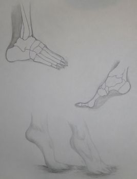 Foot Study 2 by NinjaLizzard