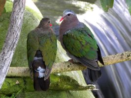 Emerald Dove Pair by Ciameth
