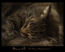 Dreaming Cat by Violet-Kleinert