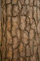 Tree Bast Textures 7 by steppelandstock