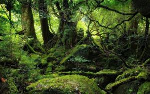 Green Nature by Sparklingbarbie