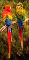 Rainbow Birds by Et-Manue-Elle