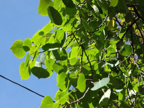 Simply Green Leaves Against A Perfectly Blue Sky by ArielJoy