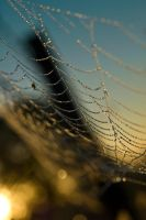 dew kissed web at sunrise by bkitten1