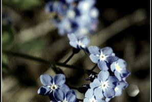 Forget Me...Not by XSomethingWickedX