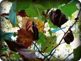 soon the autumn starts by x--photographygirl