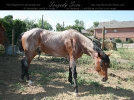 quarter horse stock 18 by tragedyseen