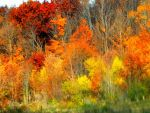 Shades of Autumn 2016, 9 by MadGardens