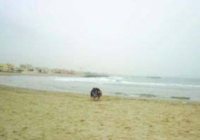 A lone beachcomber ... by Esther-cant-draw