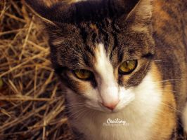 my baby by ceciliay