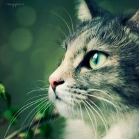 cat1 by oxygen2608