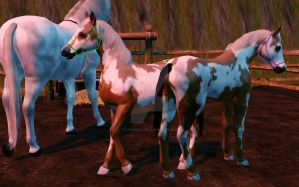 sims 3 foals by tjhorselove