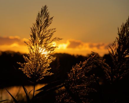 Marsh Grass Sunsrise by wally626