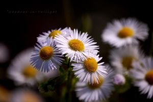 softness of a flower ball by Shadows-in-Twilight