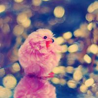 Little pink chick by EliseEnchanted