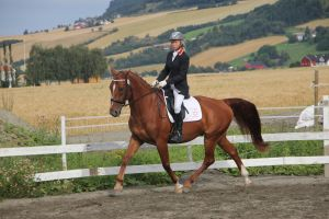 Dressage 7 by Chance-STOCK