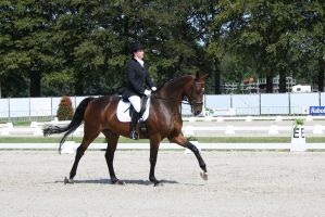Outdoor Brabant Stock 30 by chronically