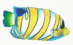 Pastel practice - tropical fish by SapphirexBlue