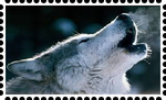 Wolf Stamp by WOLFBLADE111